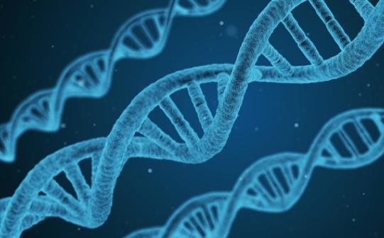 サーチュイン遺伝子とは?発毛との関係性を解説!