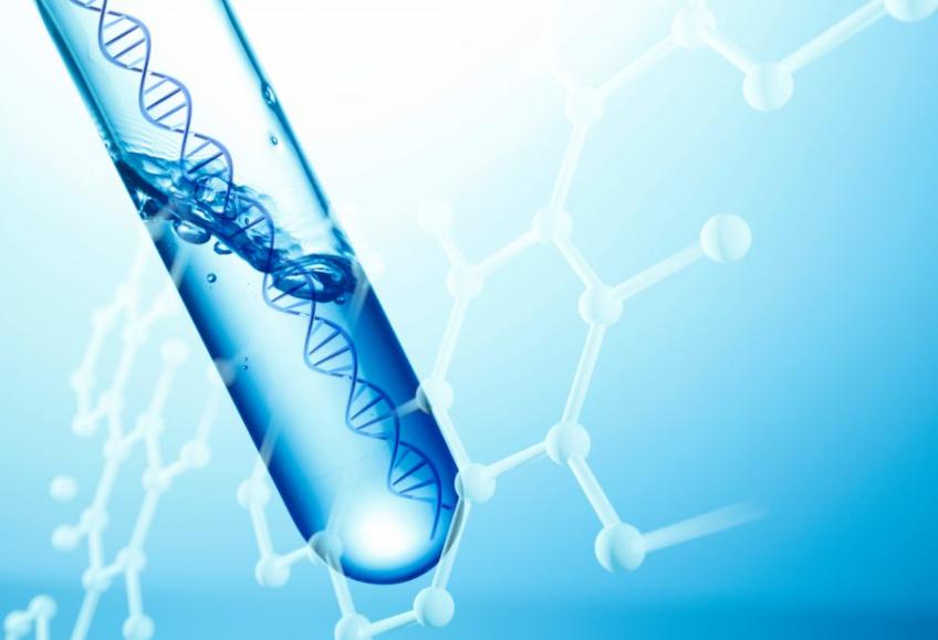 サーチュイン遺伝子を活性化させて発毛しよう!その方法とは?