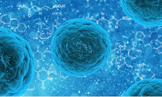 発毛には欠かせない「毛根幹細胞」と「毛包幹細胞」の違いは?